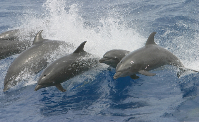 6-dolphins-in-wave