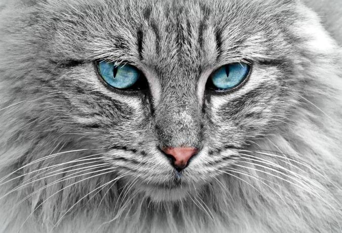 cat-1045782_1280