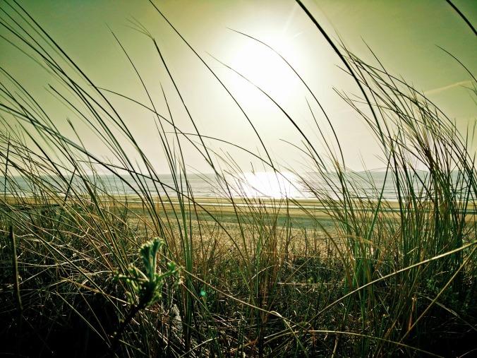 beach-1228794_1280