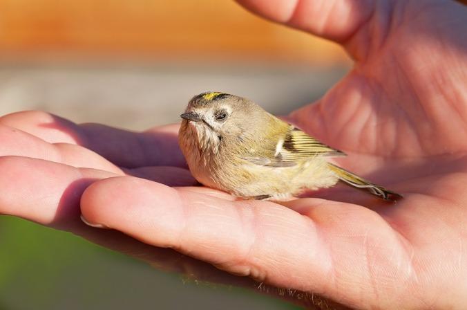 bird-1040944_1280