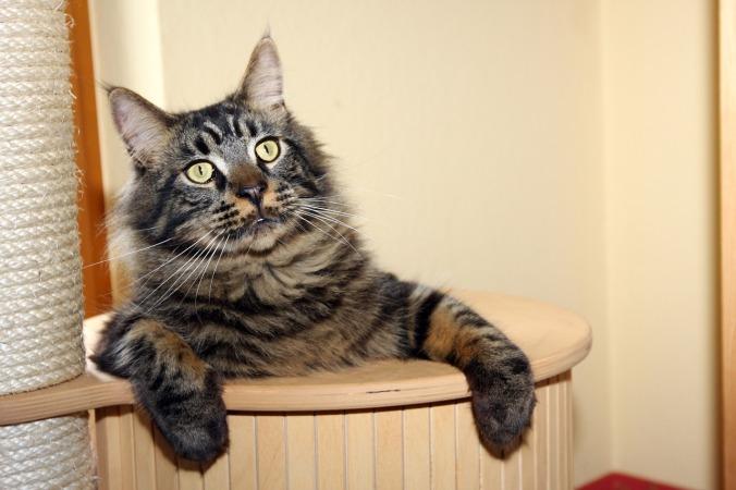 cat-1059663_1280