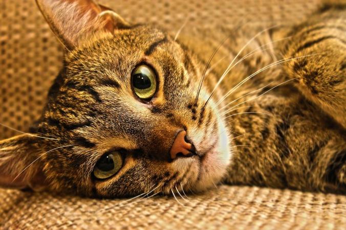 cat-1094637_1280