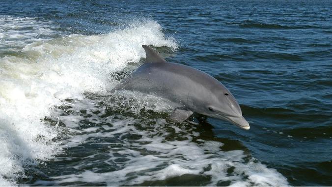 dolphin-1167996_1280