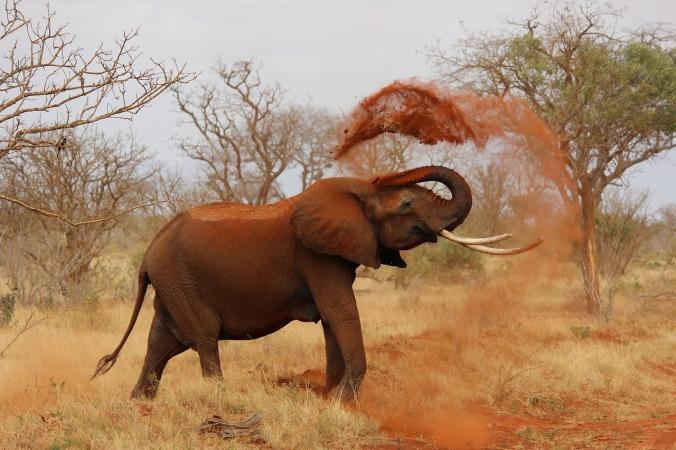 elephant-111695_1280