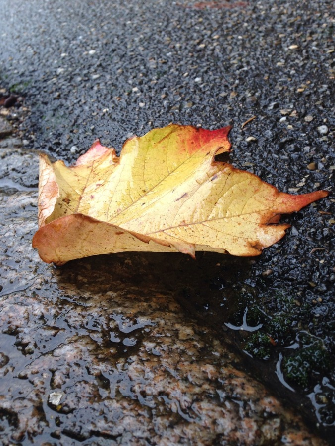 leaf-662971_1280