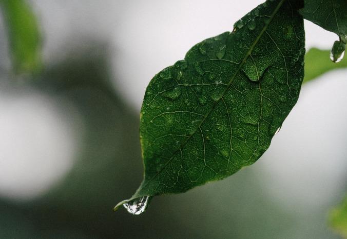 leaf-945399_1280