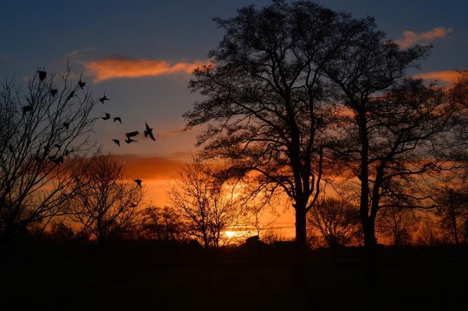 sunrise-274257_1280