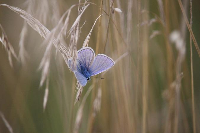 butterfly-908701_1280