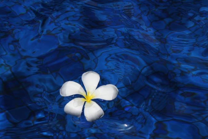 flower-1203563_1280