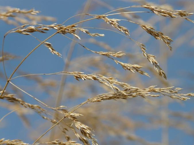 grass-60419_1280