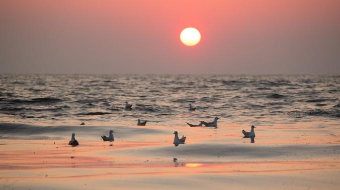 gulls-801575_1280