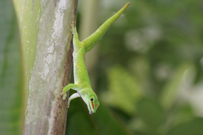 reptile-1003417_1280