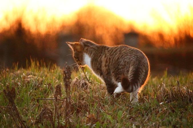 cat-1292349_1280
