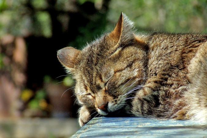cat-590684_1280