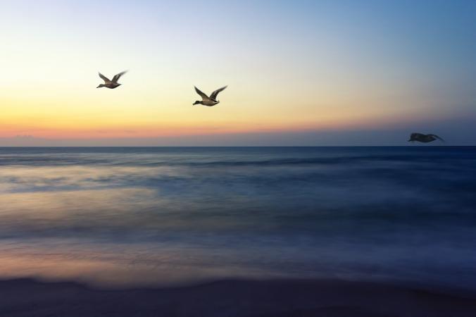 sunrise-flight-1364048_1280