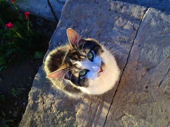 cat-1472283_1280