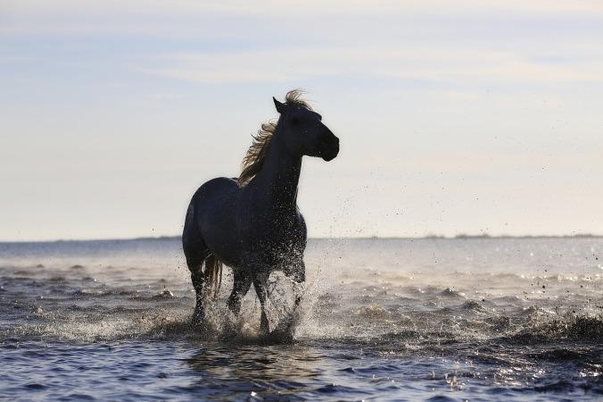 horse-1401914_1280