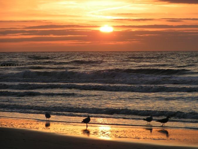 seagull-1517856_1280