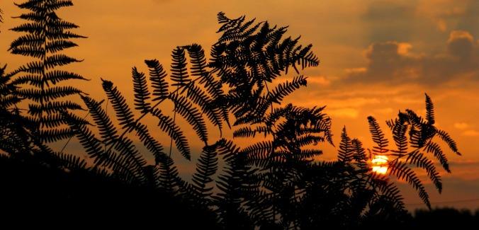sunrise-1014550_1280
