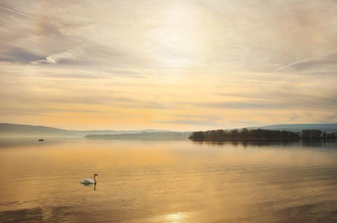 swan-1537706_1280