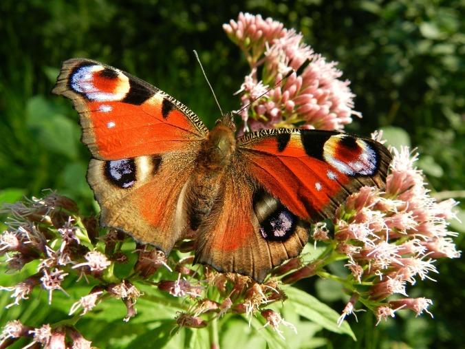 butterfly-176156_1280