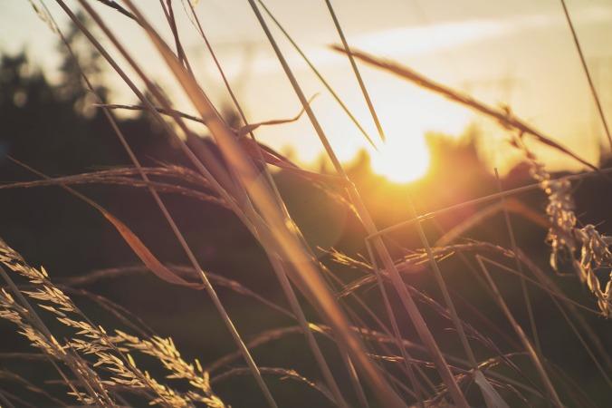 grass-872086_1280