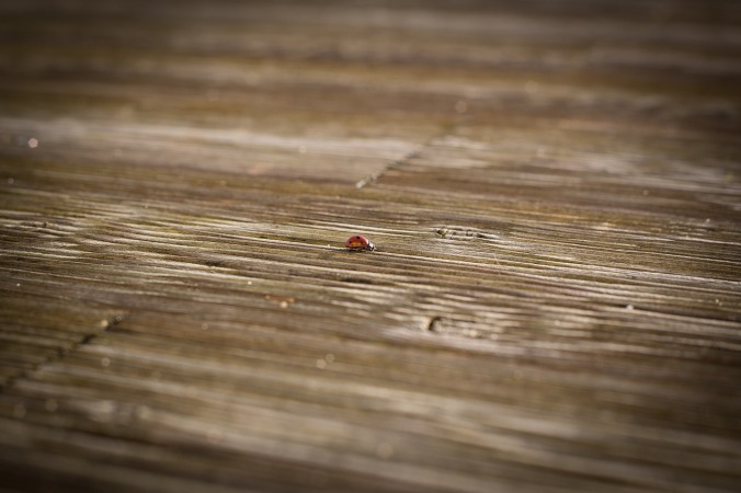 ladybug-1373906_1280