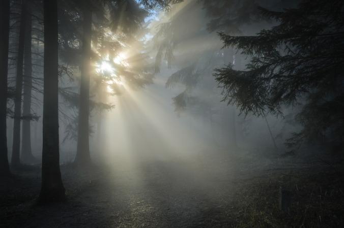 winter-sun-1547273_1280
