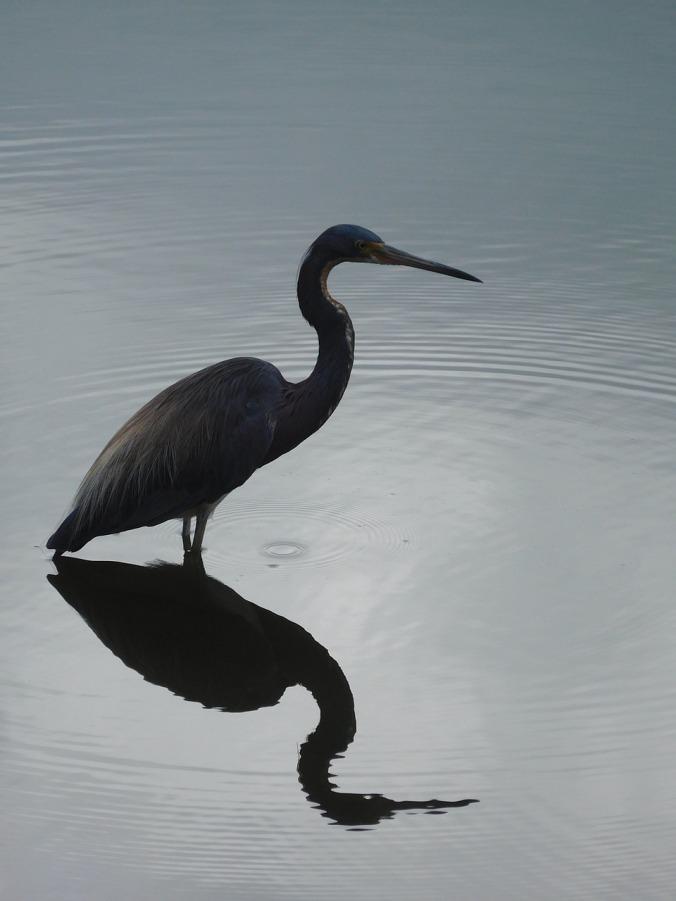 bird-1497098_1280