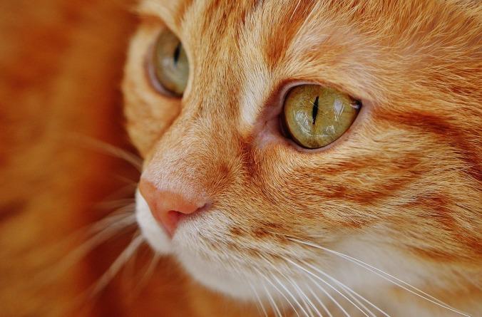 cat-1652822_1280