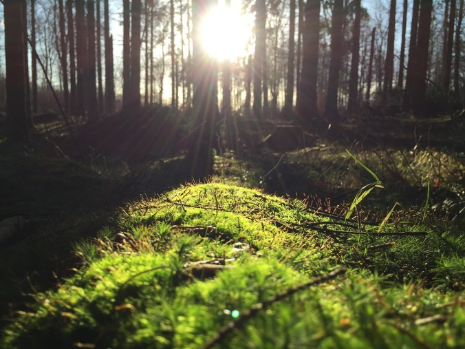 forest-1149876_1280