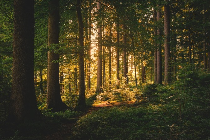 forest-1627763_1280