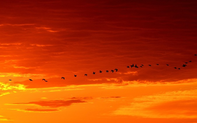 geese-1622692_1280