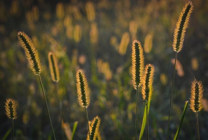 grass-1642986_1280