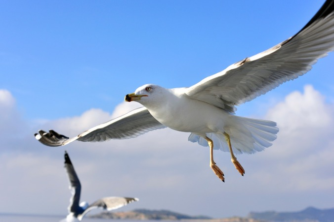 seagull-1455367_1280