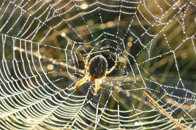 spider-web-1599476_1280