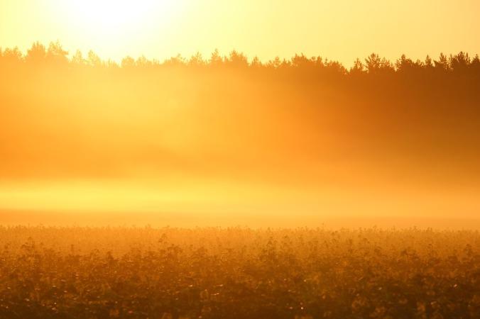 sun-1661786_1280