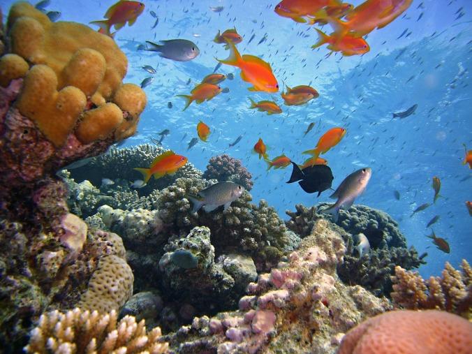 diving-1656482_1280