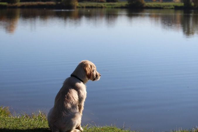 dog-1018125_1280