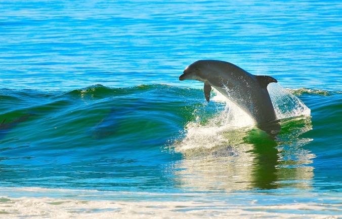 dolphin-1679468_1280