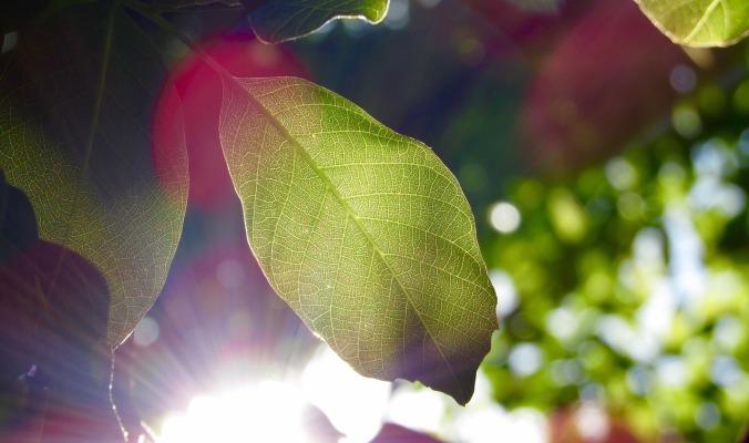 leaf-1209899_1280