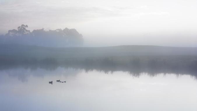 duck-1752065_1280