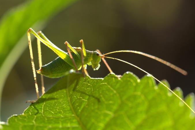 grasshopper-1615011_1280