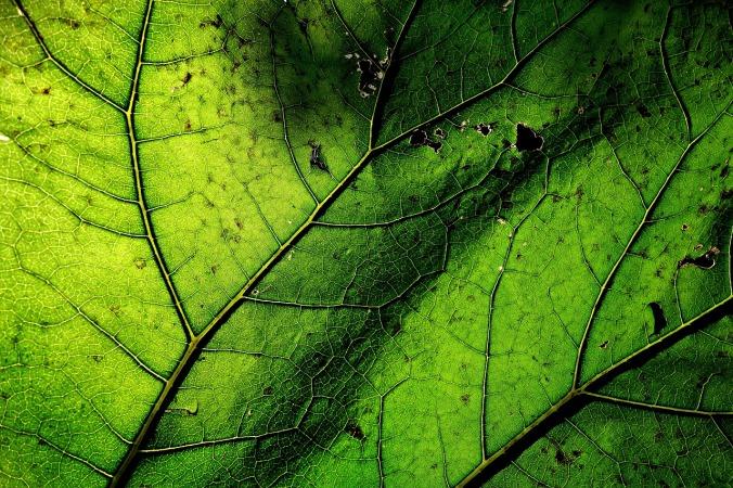 leaf-1846524_1280