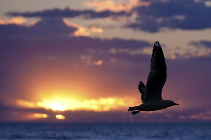 seagull-1626449_1280