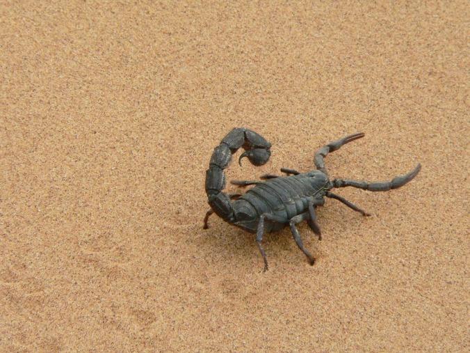 giant-scorpion-1076314_1280