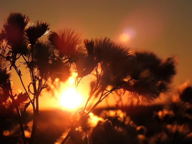 sunrise-1729054_1280