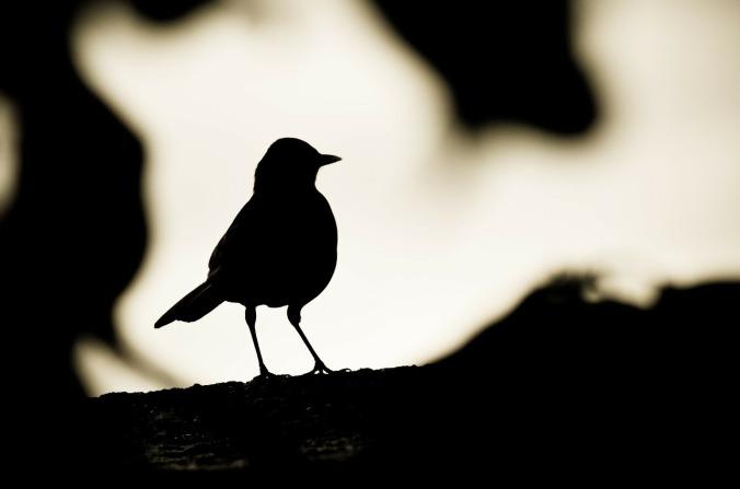 birds-219711_1280