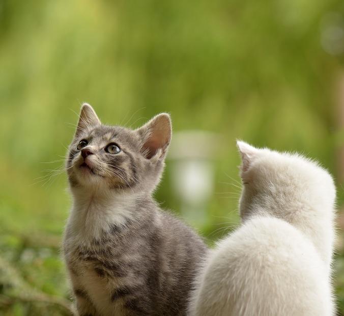 cat-2273598_1920