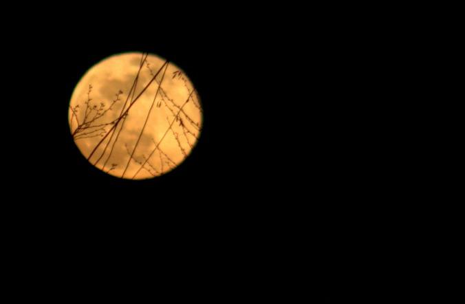 full-moon-2321171_1920